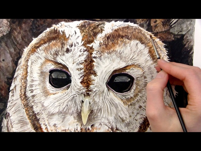 How to paint realistic owl eyes in watercolor