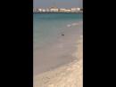 Дикая сторона пляжа