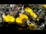 Весна пришла раньше срока