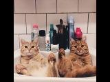 Двоих рыжих котят,найденных в саду, не разлучали ни на один день