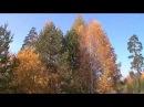 Опавшие листья (гавайская гитара).WMV