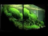 Aquascaping - Aquarium