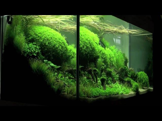Aquascaping Aquarium Ideas from The Art of the Planted Aquarium 2011 part 1