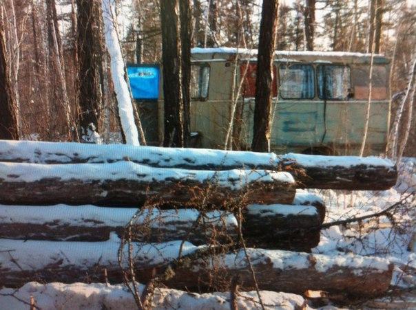 В Намцах выявлен факт незаконной вырубки леса (+видео)