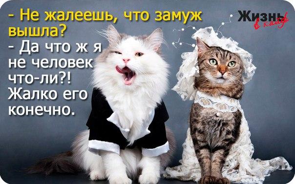 https://pp.vk.me/c629505/v629505368/4b2d5/thVVvRvuRiw.jpg