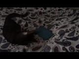Кошка Матрешка любит радио Джаз