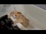 А как вы купаете своего кота?