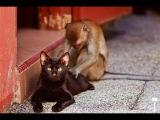 Подборка Приколов  с Животными 2016 Кошки,Собаки  Смешные Животные 2016