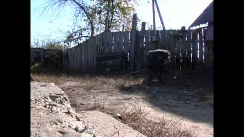 Украинское колдовство - Часть 1 - В поисках истины