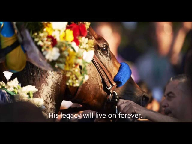 American Pharoah the Story of America's Hero