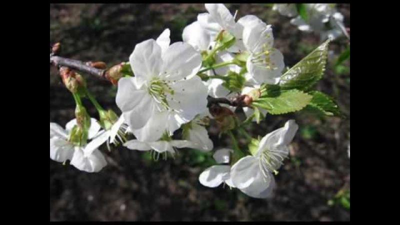 გაზაფხული შემოსულა ლეეეენ spring comes,len