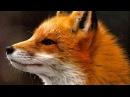 Ylvis - The Fox (what does the fox say?) Lyrics