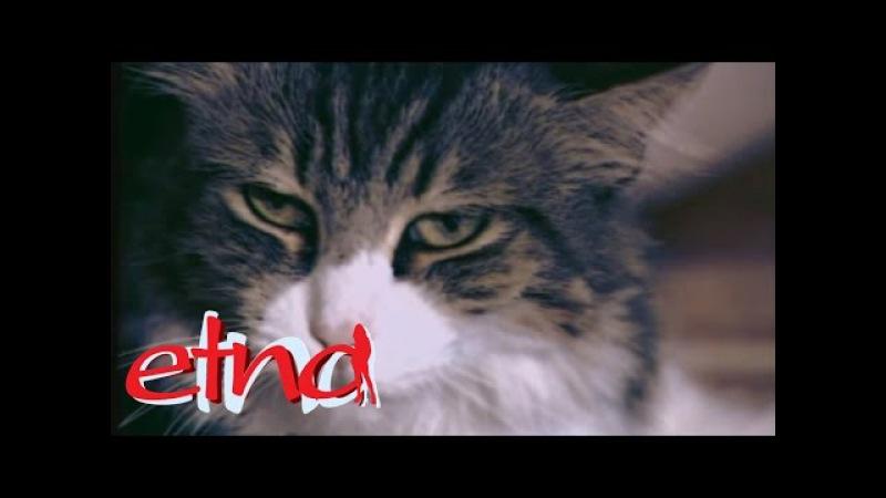 Etna - Drań (Official Video) 2002