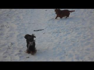 Прогулка в лесу морозным деньком. -17 С. Лимбочка и красотка Крис.