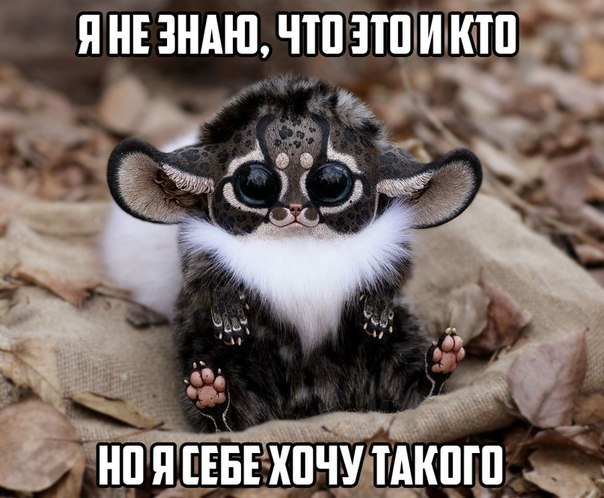 Альбина Давлетгариева |