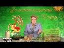 Целительница Софья Нагорняк - Лечебные свойства одуванчика