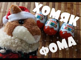 Хомяк Фома открывает Киндеры Сюрпризы/Hamster Homa opens Kinder Surprises
