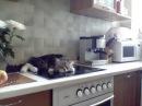 Смешной кот Никифор огрызается
