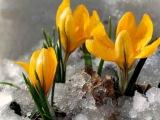 Фредерик Шопен. Нежный аромат весны!