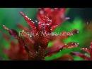 Red Plants (Aquatic)