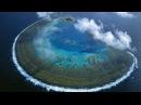Жизнь на Большом Барьерном рифе Большой Барьерный риф Часть 1