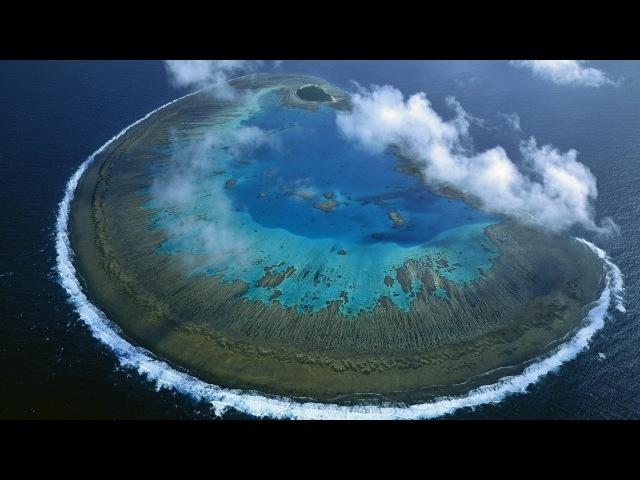 Жизнь на Большом Барьерном рифе. Большой Барьерный риф (Часть 1)
