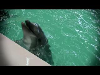 Дельфин афалина - секс, драгс, рок-н-ролл - Все как у зверей на Черном море