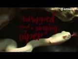 Dada, Paul Harris Dragonette - Red Heart Black 1080p