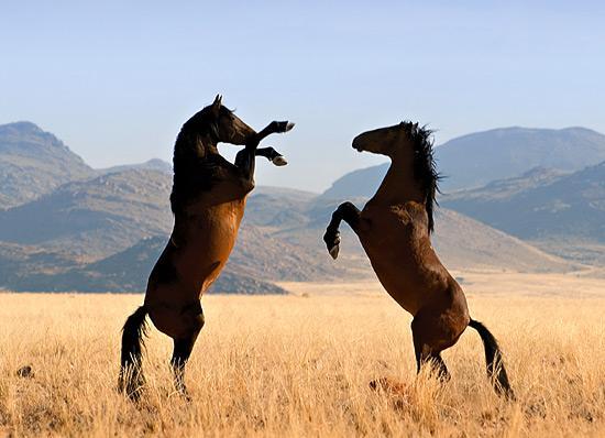 Люди-лошади