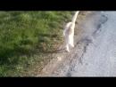Кошка со сломаной лапко. Но хочет жить и живет