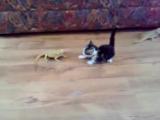 Котёнок vs ящерицы Kitten afraid of lizards