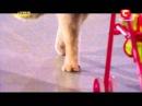 Україна має талант-4 - Кошки