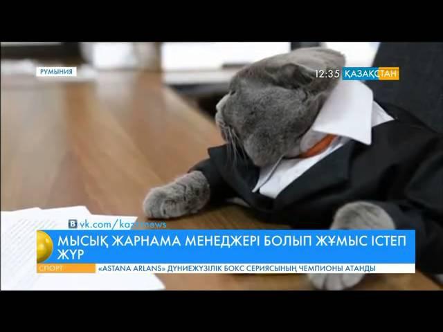 Бухаресттегі бір компанияда «Босс» атты мысық жарнама менеджері қызметін атқарады