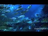 Супер релакс музыка  (relax music) Аквариум