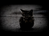 Страшные истории на ночь - Кошмар в доме