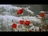 Nicholas Gunn ''The Swallows Of Na' Lu'um''