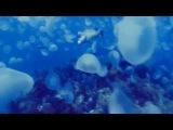 ЛСП - Синее