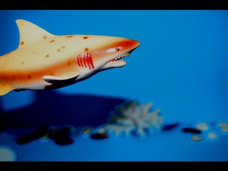 Акула и Кит. Дельфин. Животные.  Видео игрушки. Для детей