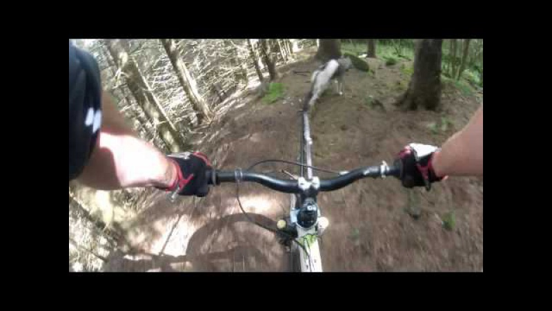 Go Pro HD Cani-VTT Downhill Husky Extreme bike joring » Freewka.com - Смотреть онлайн в хорощем качестве