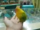 Попугай который видил секс