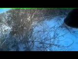 Охота на зайца. Северный Казахстан. Отчет 2015