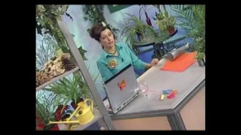 Биология 75. Хищники фоссы — Академия занимательных наук