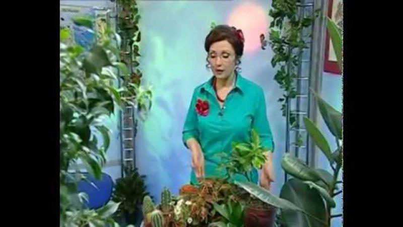 Биология 35 Колеус Глубоководные удильщики Утром на траве роса Академия занимательных наук