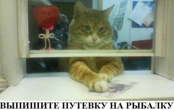 http://cs629513.vk.me/v629513590/53b52/xwqLdHlD_vA.jpg