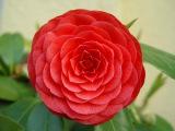 Красивые картинки цветов - все любуются!