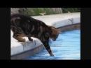 Lustige Videos Katzen Teil 1 Werden Sie Kichernd