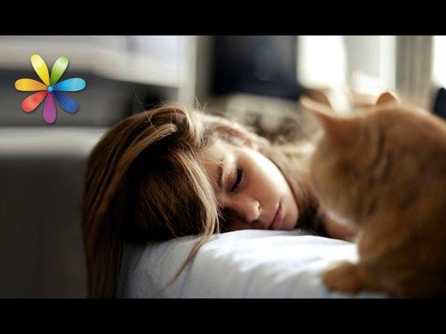 Как правильно просыпаться, подскажет… кот! – Все буде добре. Выпуск 690 от 20.10.15
