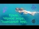 Крым. Черное море. Подводный мир.