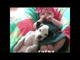 Маленькая девочка и её питбуль - лучшие друзья с самого рождения