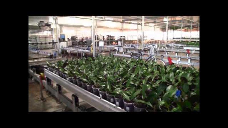 Inside Ter Laak Orchids